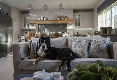Pet Friendly Home Alexander James Interior Design