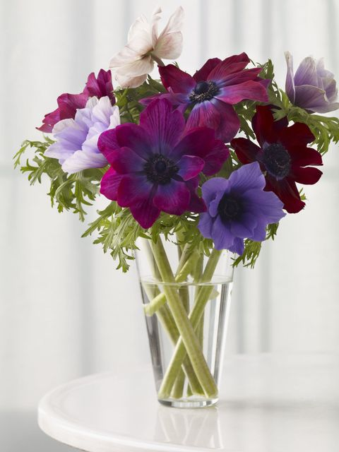 Anenome Flowers In A Gl Vase