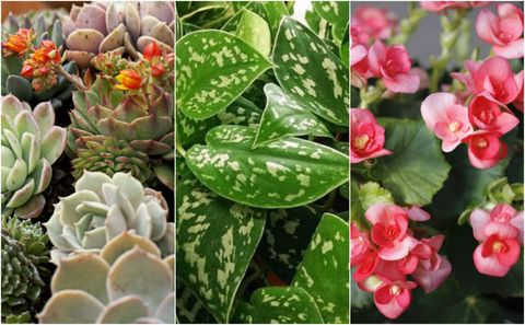 Houseplants that can survive neglect