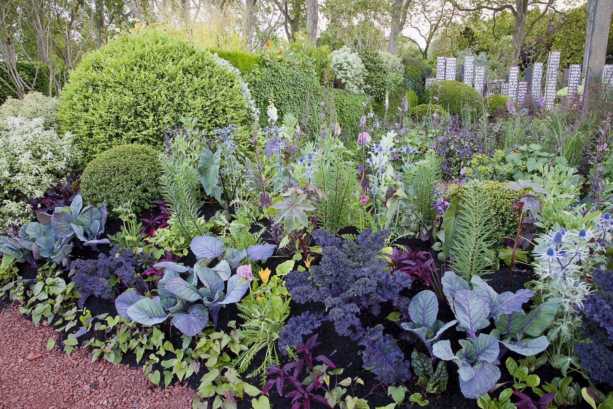 Image result for Companion Planting