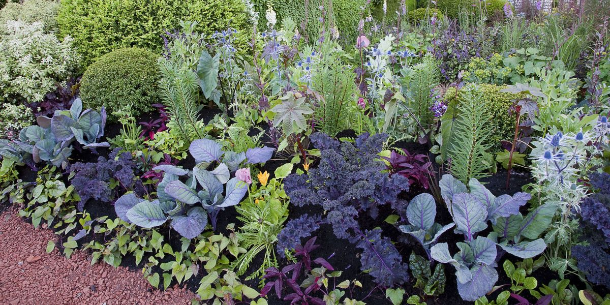 A visual guide to companion planting