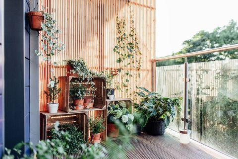 Outdoor Plants In Balcony