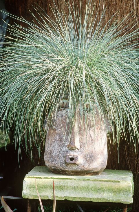 Best ornamental grasses for your garden festuca ornamental grass workwithnaturefo