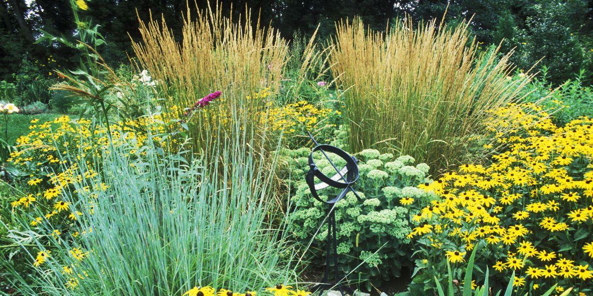 Best ornamental grasses for your garden workwithnaturefo