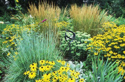 Ornamental grass in flower bed