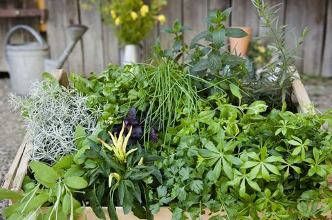 Can Garden Herbs And Spices Really Cure You?
