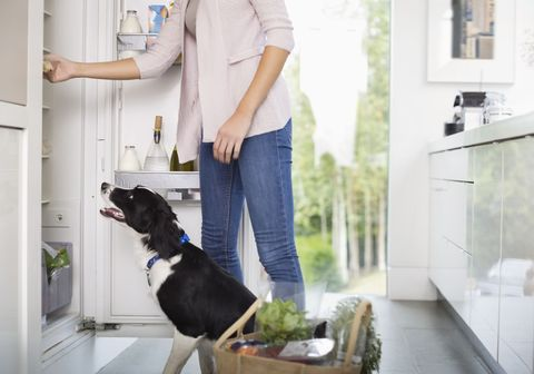 Dog and woman looking inside fridge