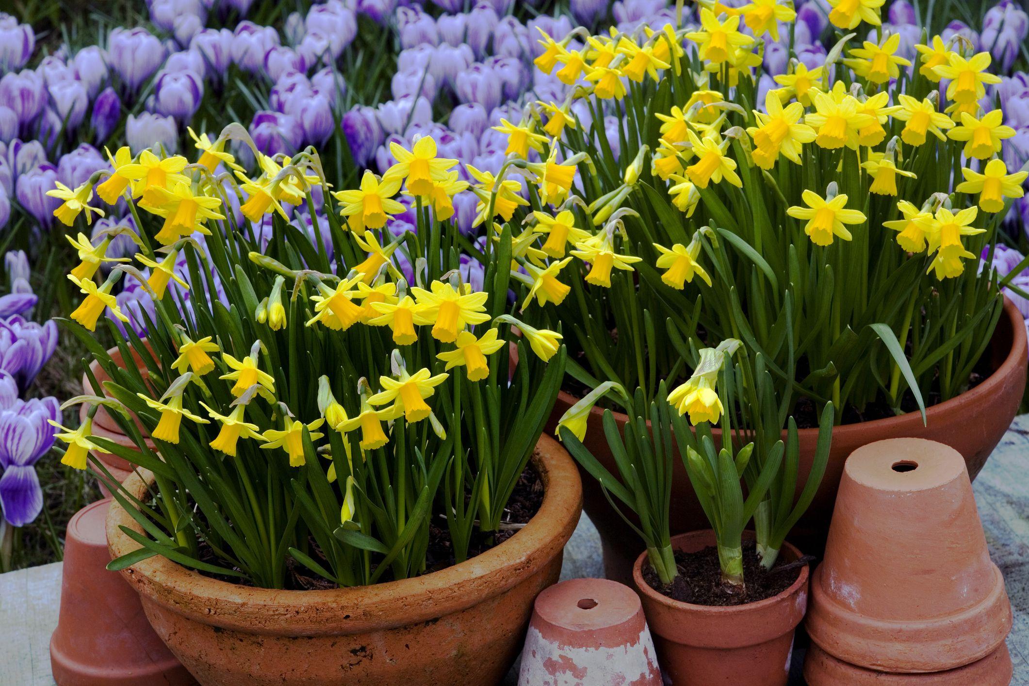 Gardening in autumn: The best way to prepare your garden for next spring