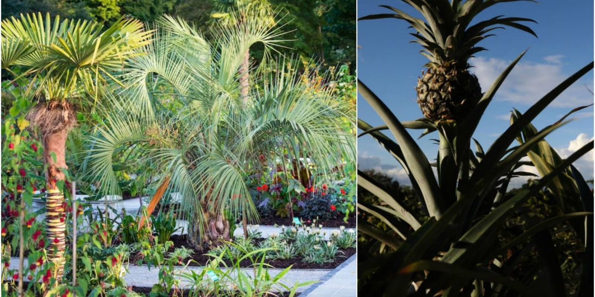 Tour Rhs Wisley Garden S New Exotic Garden Feature