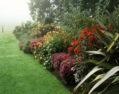 Autumn Border In Garden