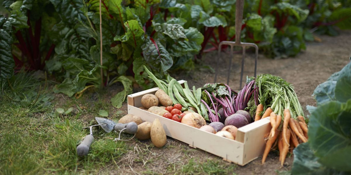 Grow your own: 5 common gardening myths debunked