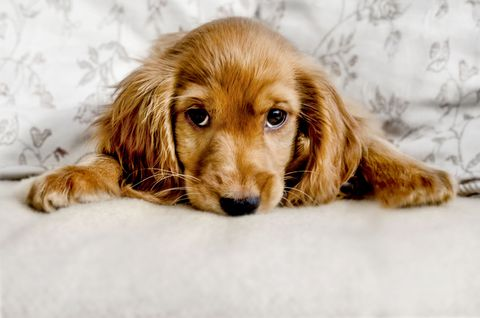 Puppy on bed