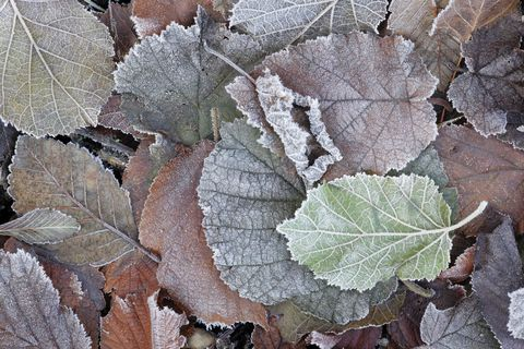Frost on leaves in the garden