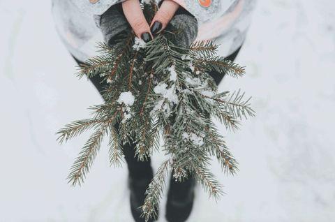 Lagom - Sweden - fir tree - Alisa Anton - Unsplash