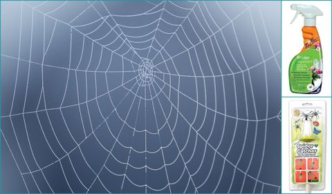 Spider Repellent Products
