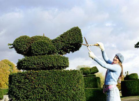 topiary - bird - hedge