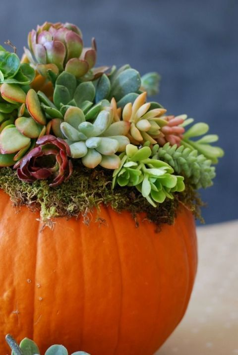 "<p>Keep it natural with an adorable <a href=""http://www.housebeautiful.co.uk/garden/plants/how-to/a538/how-to-grow-succulents/"" data-tracking-id=""recirc-text-link"">succulent</a>-topped pumpkin. Whether you style it at your front door or around the house, embrace this&nbsp;lush autumnal planter from <a href=""http://www.simplyhappenstance.com/pumpkin-succulent-harvest-decoration/"" target=""_blank"">Simply Happenstance</a>.</p>"
