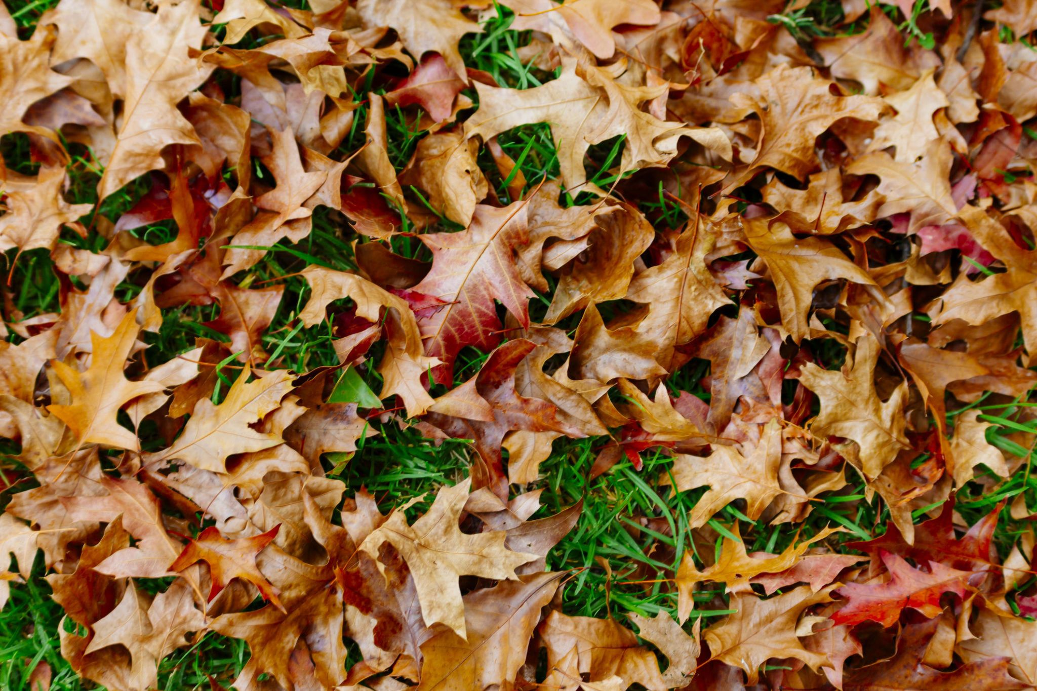 5 of the best ways to put fallen leaves to work in your garden