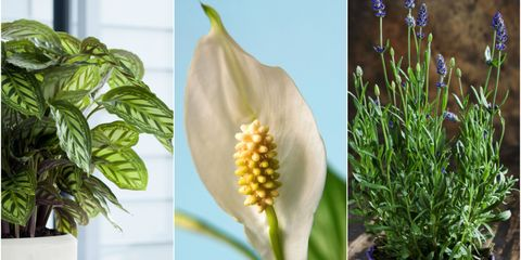 Houseplants to help beat the winter blues