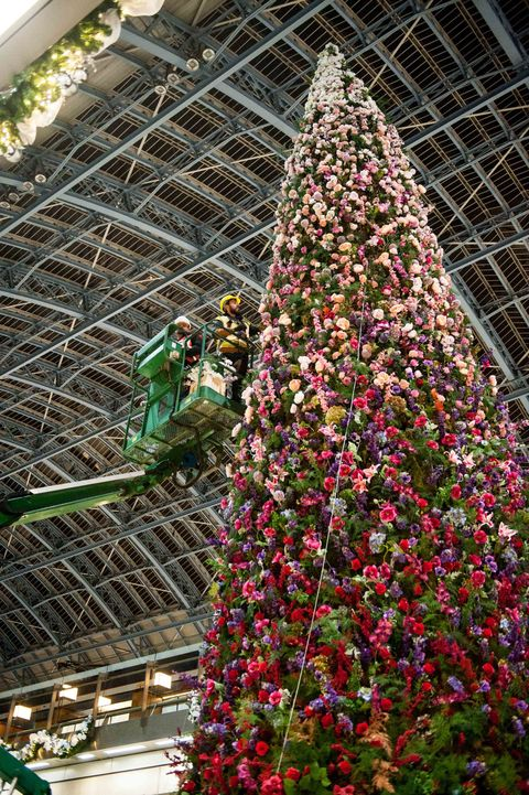 47ft floral Christmas tree unveiled at St Pancras International station, London.
