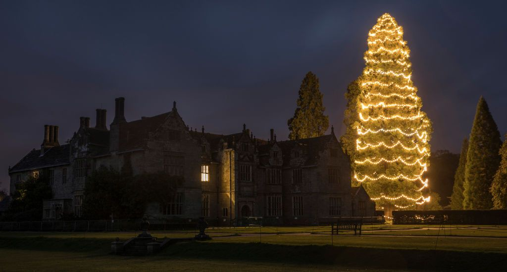 UK's Tallest Christmas Tree at Wakehurst Decorated With 1,800 Lights