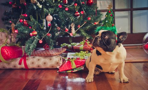 10 christmas hazards all pet owners should be aware of
