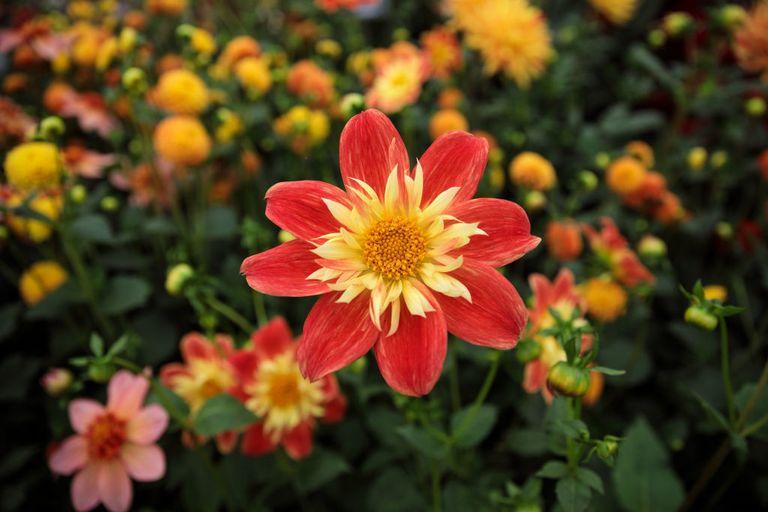 Chelsea Flower Show - cover
