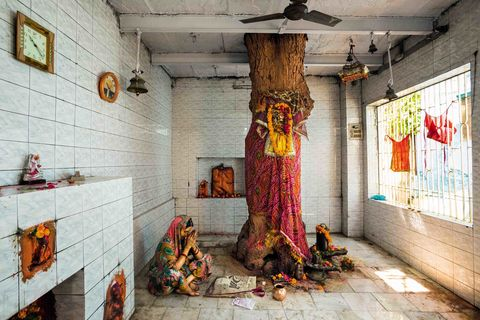 "Neem Tree, sacred tree shrine, Nanghan Bir Baba Temple, Bhadaini district, Varanasi (Benares), Uttar Pradesh, India.  The Neem tree is adorned with ornate red cloth and facemask that honors the Goddess Shitala.  As a sign of respect to the Goddess, the residents of Bhadaini built a temple around their sacred tree. The Neem, like the Pipal Tree, has a long history of veneration in India, as evidenced by art circa 2500 B.C., found in the Indus Valley.  The Neem Tree (Azadirachta Indica) is in the mahogany family, and is a fast growing, drought-resistant tree.  It is a tree with immense medicinal value, and is often referred to as ""the village pharmacy"".  Various parts of the tree are used to treat or prevent illnesses such as malaria and diabetes – and the leaves are used to prevent insect infestations.  Most worship the Neem as the goddess, Shitala - the goddess of good fortune.  Shitala means the ""Cool One"", and is aptly named for her protection from dangerous high fevers from smallpox, malaria, and chicken pox, among others.  The tree is either viewed as the residence of the goddess or an embodiment of her.  Worshippers often adorn the tree with an ornate red cloth and facemask, to enhance their relationship with the tree as a goddess."