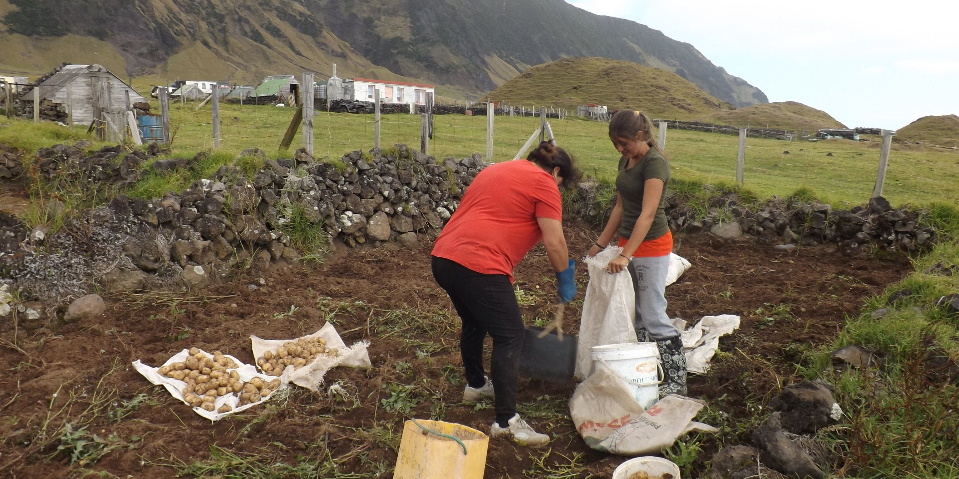 Woman and girl potato farming on remote island