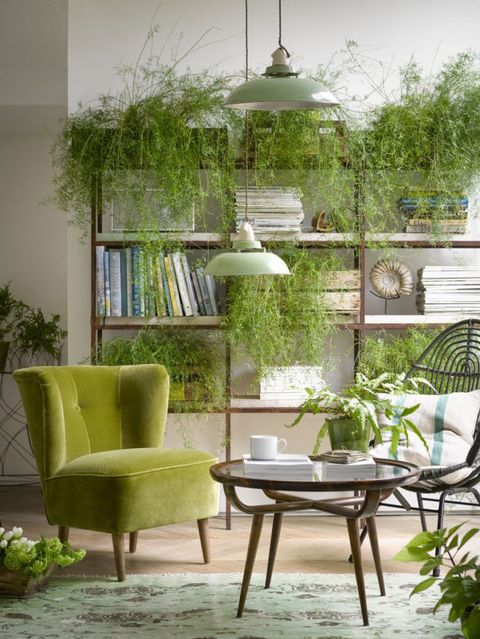 Green sofa and greenery - plants
