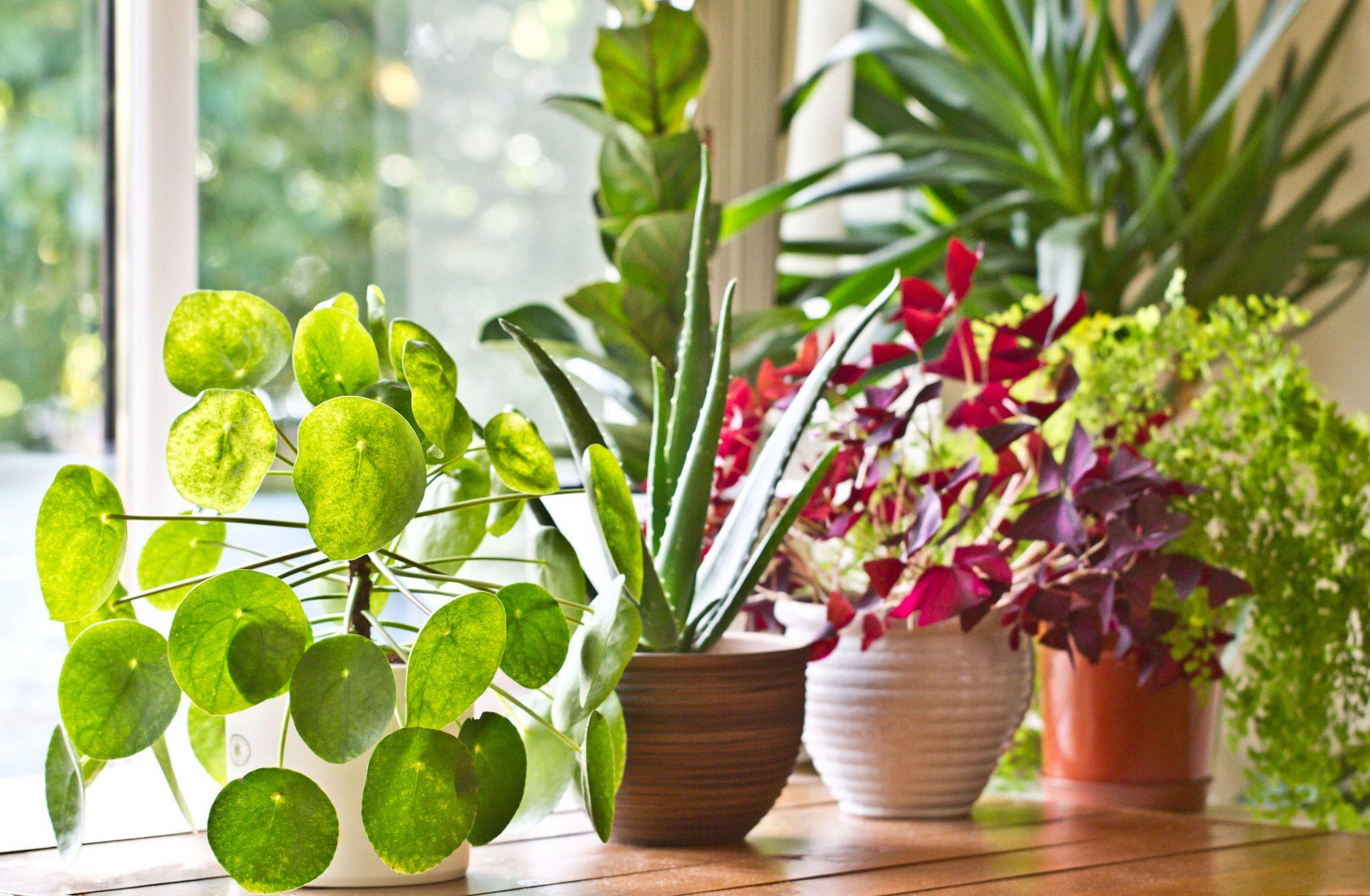 Good Selection Of Houseplants