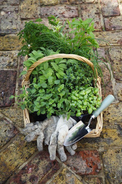 Basket of herbs, gardening gloves and trowel