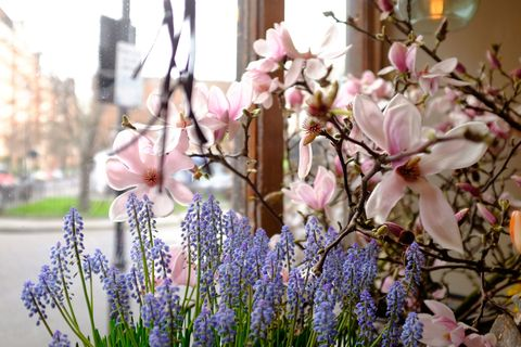 """<p>'Always start by looking at what is in season,'suggests Rosebie. 'Mother's Day falls early this year but there are still many beautiful <a href=""""http://www.housebeautiful.co.uk/garden/plants/news/a3364/magic-flowers-year-life-span/"""" data-tracking-id=""""recirc-text-link"""">seasonal flowers</a> to choose from. Magnolia is my absolute favourite at this time of year but also look out for Forsythia, Hellebores, Cherry Blossom, Hamamelis (Witch Hazel) and Lily of the Valley. For me, they all herald the start of spring and bring so much joy to a Mother's Day arrangement.'</p>"""