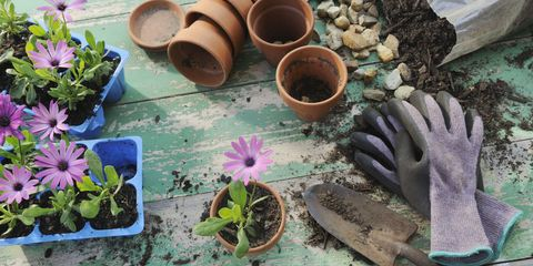 Gardening  pots and gloves