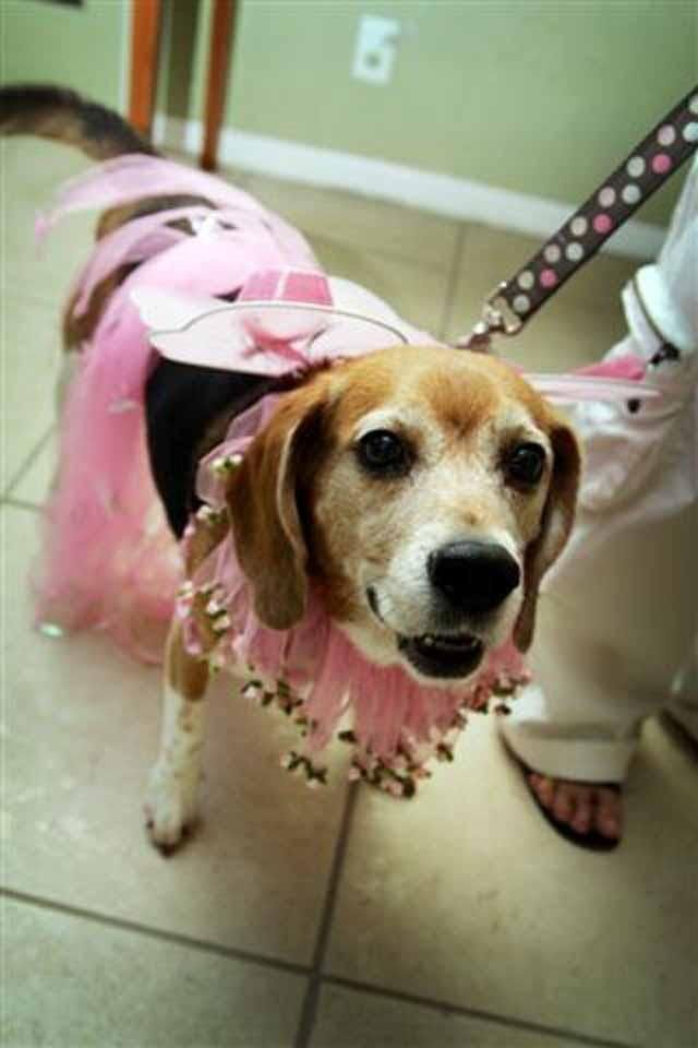 Howl-O-Ween Costume Party