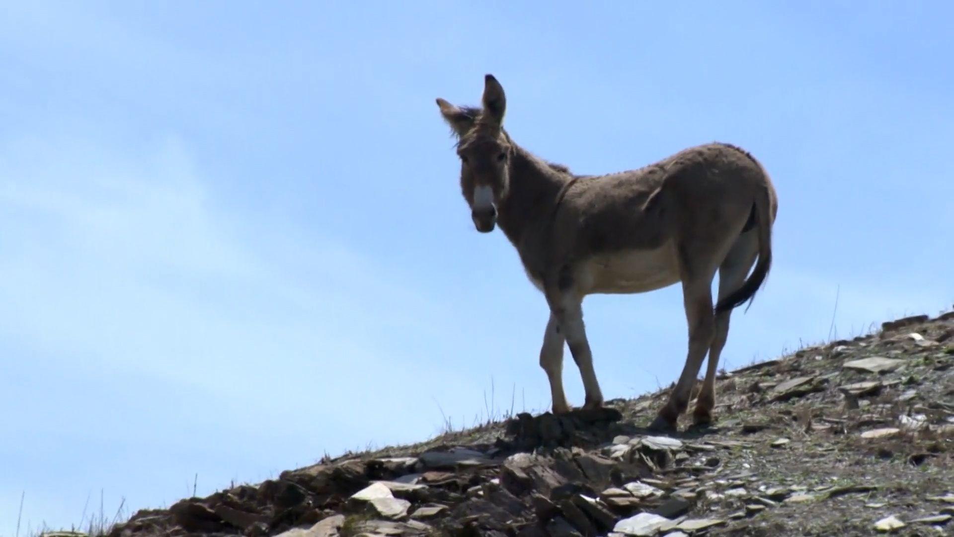 bhdn stranded burro pkg kcra st1 100000000008a19e 136 1 mp4 still002 1493221557 jpg