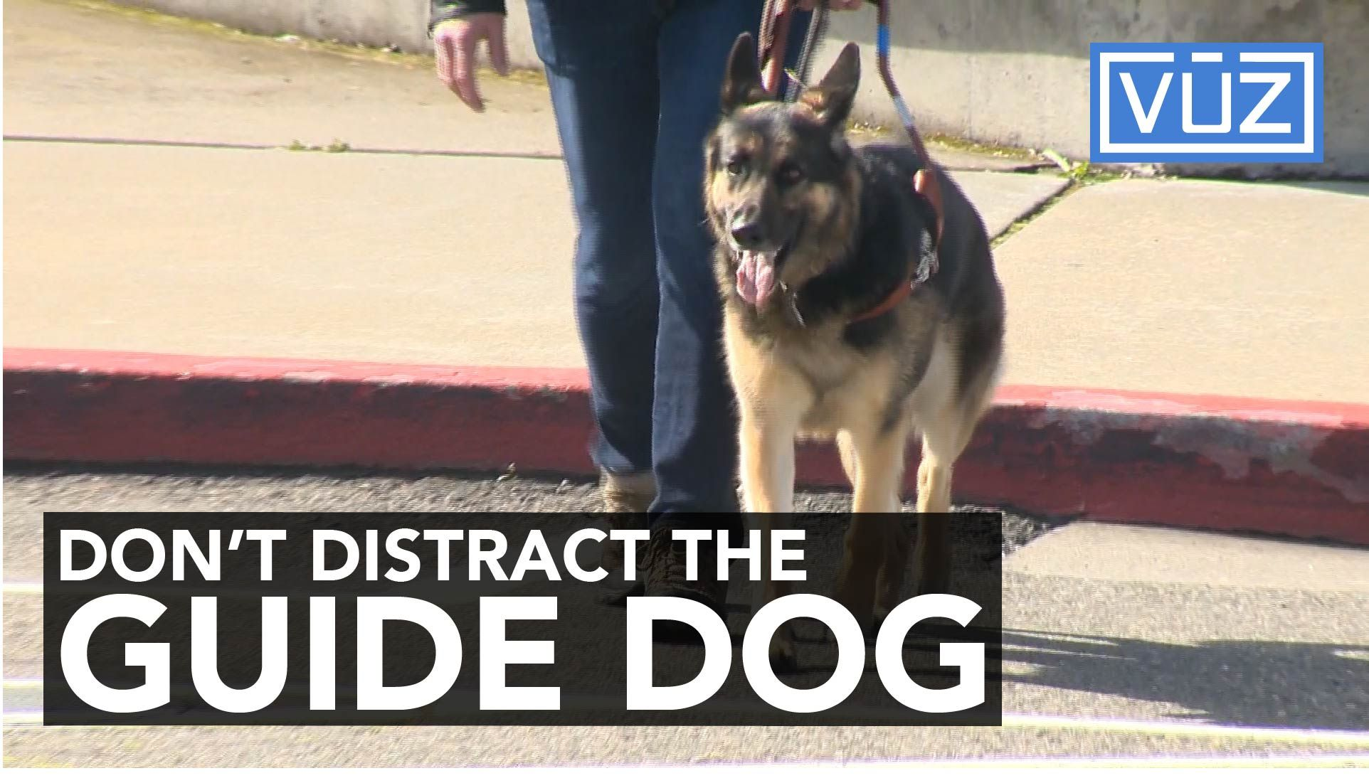 guide-dog-1490648061