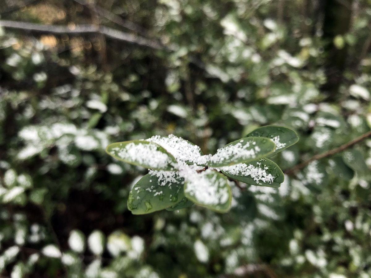 https://www wvtm13 com/article/snow-next-week-still-uncertain-cold