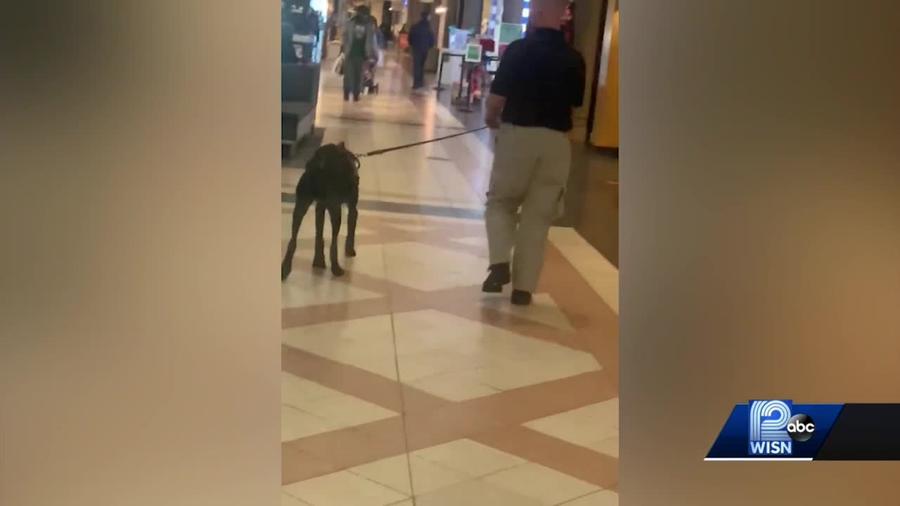 Mayfair Mall brings in gun-sniffing dogs