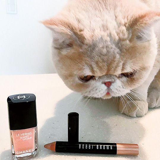 Cat, Felidae, Skin, Cosmetics, Beauty, Small to medium-sized cats, Eye, Material property, Lip gloss, Liquid,