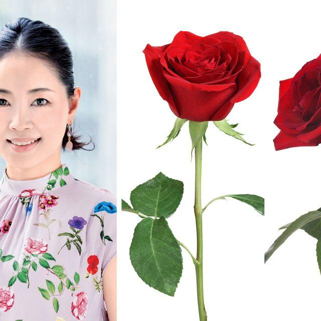 Garden roses, Flower, Red, Rose, Rose family, Plant, Beauty, Botany, Cut flowers, Petal,