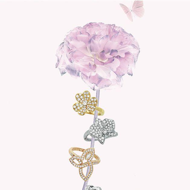 Cut flowers, Product, Pink, Flower, Plant, Illustration, Hydrangea,