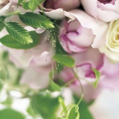 Petal, Flower, Pink, Flowering plant, Garden roses, Rose family, Rose order, Cut flowers, Hybrid tea rose, Artificial flower,