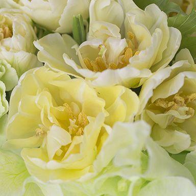 Flower, Garden roses, Rose, Petal, Plant, Rose family, Flowering plant, Yellow, Cut flowers, Bouquet,