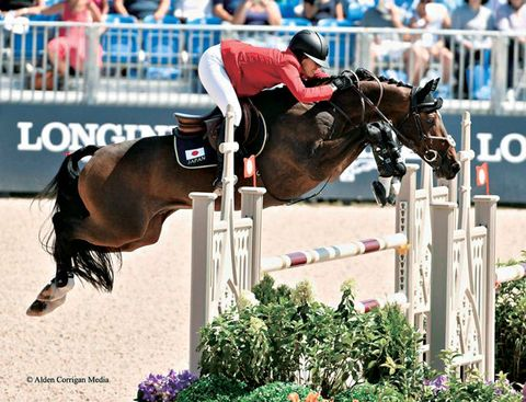 Horse, Show jumping, Bridle, Equestrian, Equitation, Animal sports, Sports, Eventing, Rein, English riding,