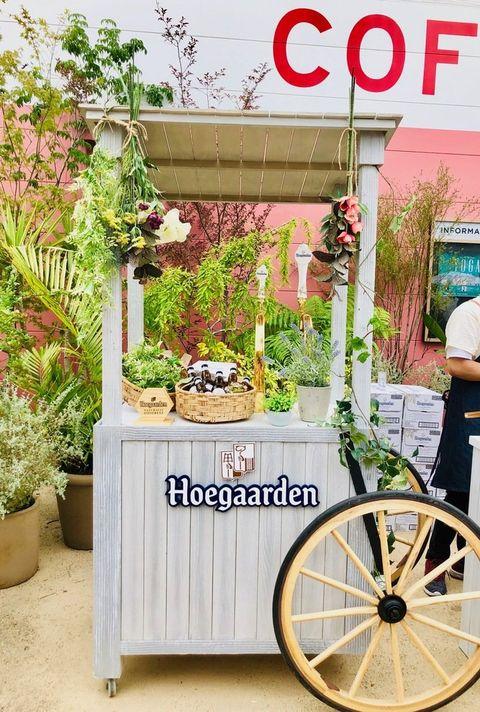 Bicycle, Bicycle wheel, Vehicle, Bicycle fork, Plant, Floristry, Herb,
