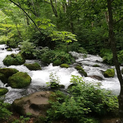 Vegetation, Nature, Watercourse, Nature reserve, Stream, Natural landscape, Water resources, Riparian zone, Tree, Green,