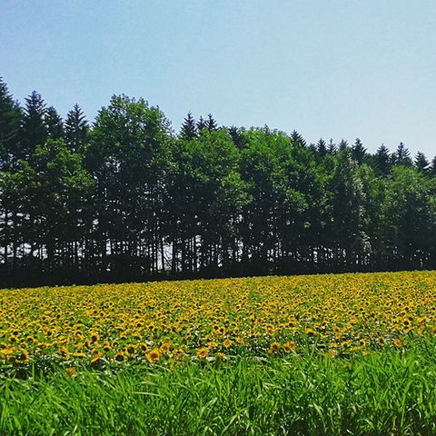 Natural landscape, People in nature, Field, Sky, Meadow, Natural environment, Flower, Plant, Grassland, Crop,