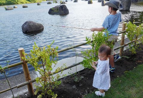 Water, Child, Pond, Botany, Vacation, Plant, Summer, Lake, Rock, Tree,