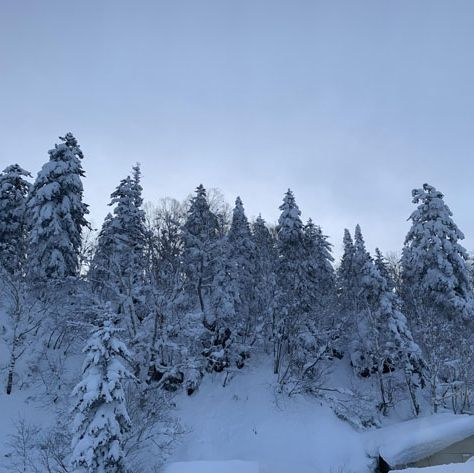 Snow, Winter, shortleaf black spruce, Tree, Freezing, Sky, Atmospheric phenomenon, Frost, Natural environment, Spruce-fir forest,